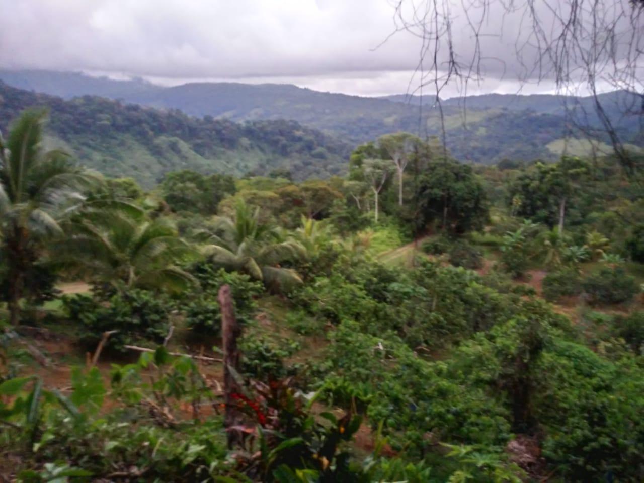 Propiedad a media hora de Pérez Zeledón y cerca de Dominical